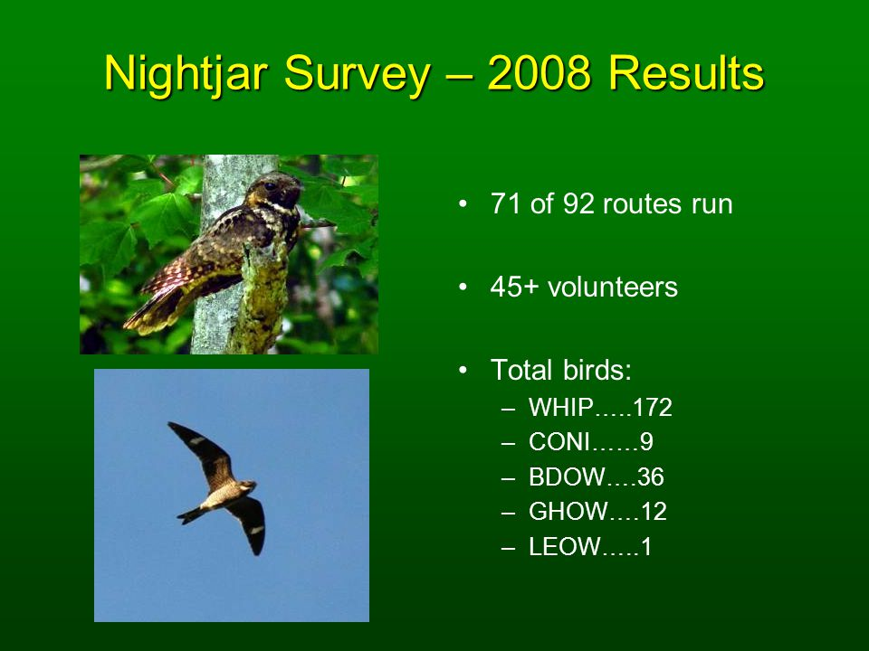 Nightjar Survey – 2008 Results 71 of 92 routes run 45+ volunteers Total birds: –WHIP…..172 –CONI……9 –BDOW….36 –GHOW….12 –LEOW…..1