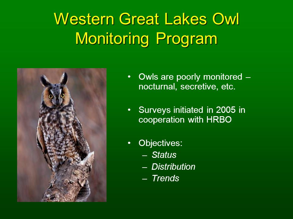 Western Great Lakes Owl Monitoring Program Owls are poorly monitored – nocturnal, secretive, etc.