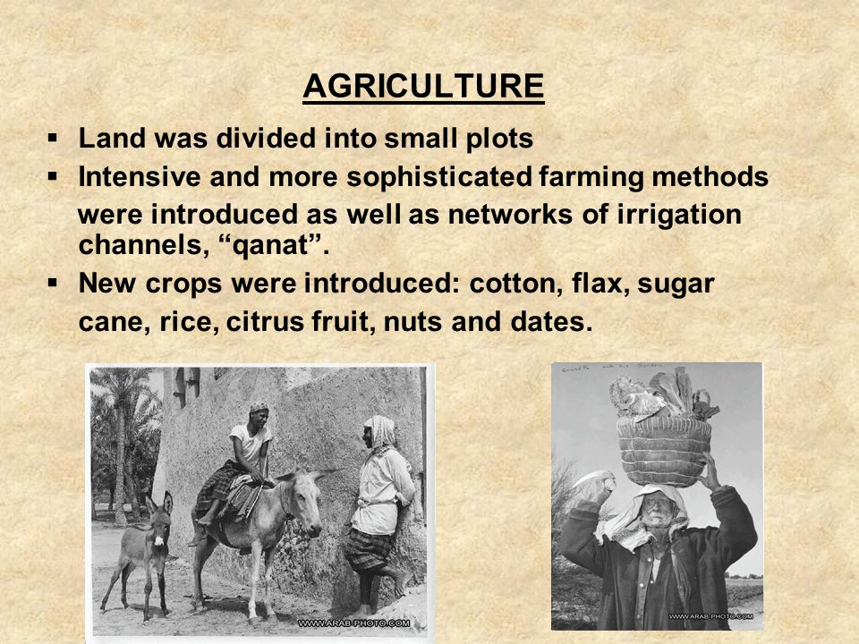 AGRICULTURE Land was divided into small plots Intensive and more sophisticated farming methods were introduced as well as networks of irrigation chann