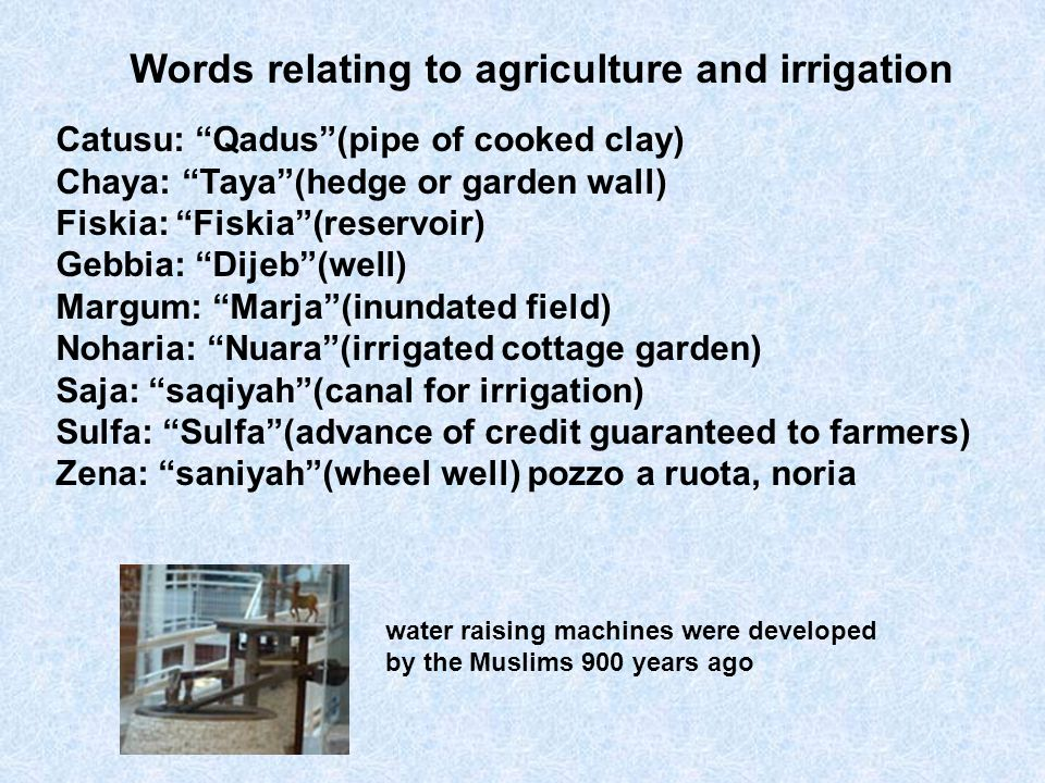 Catusu: Qadus(pipe of cooked clay) Chaya: Taya(hedge or garden wall) Fiskia: Fiskia(reservoir) Gebbia: Dijeb(well) Margum: Marja(inundated field) Noha