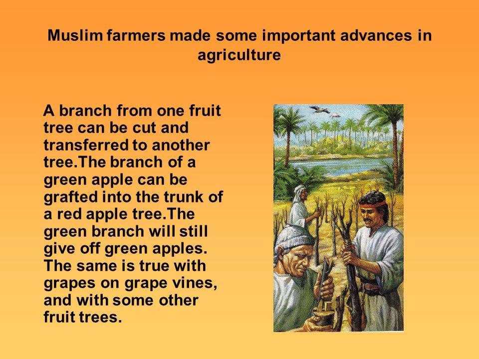 Muslim farmers made some important advances in agriculture A branch from one fruit tree can be cut and transferred to another tree.The branch of a gre