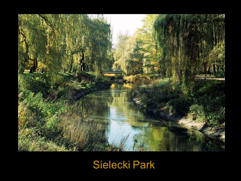 Sielecki Park