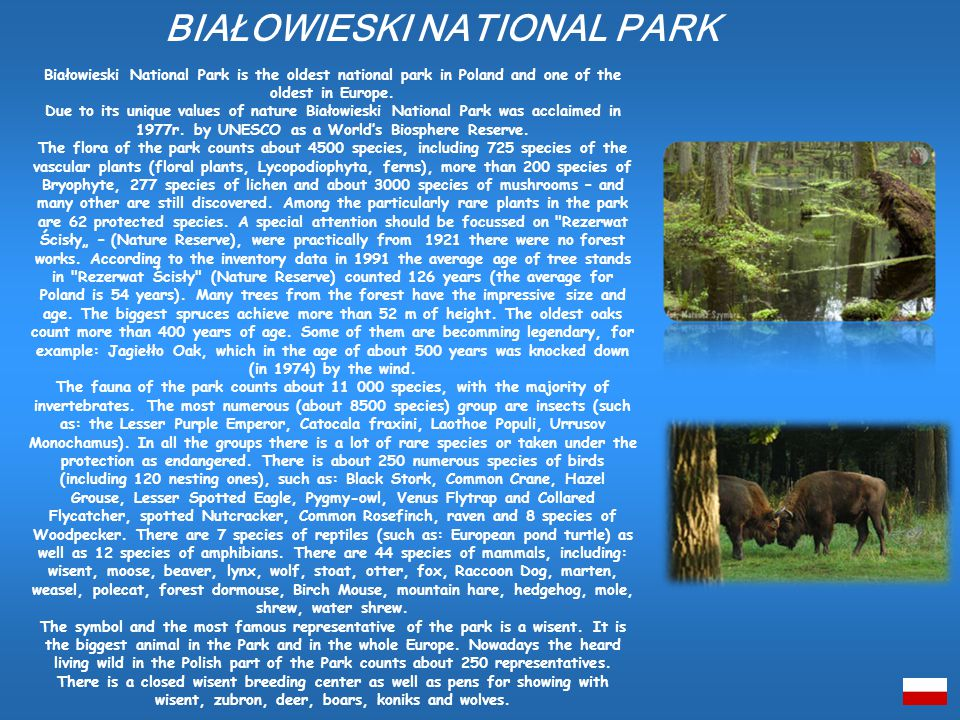 Białowieski National Park is the oldest national park in Poland and one of the oldest in Europe.