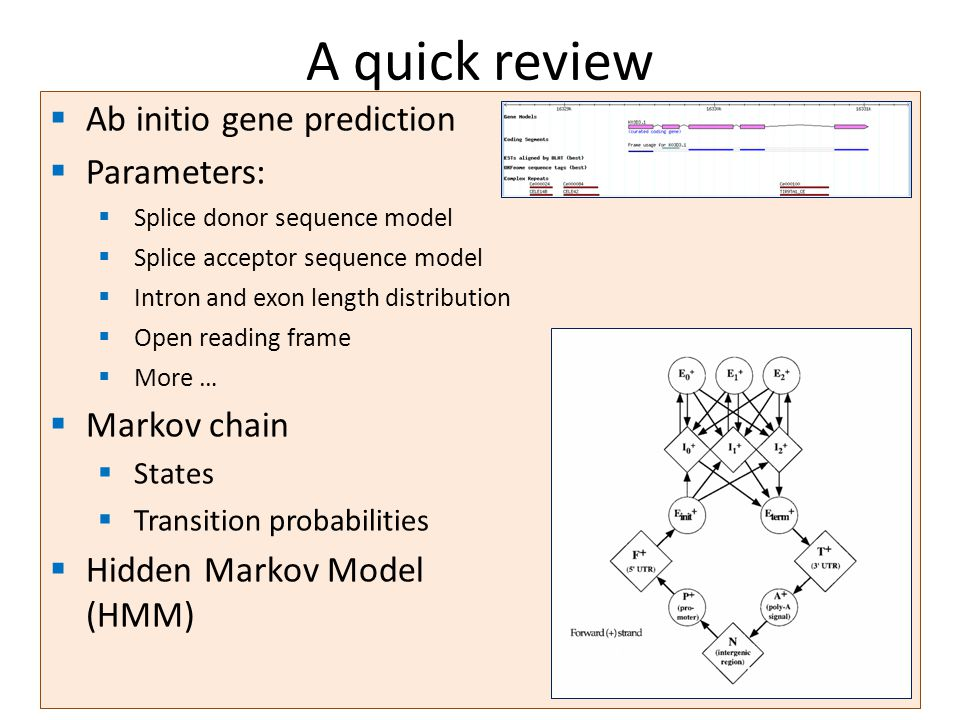 Ab initio gene prediction Parameters: Splice donor sequence model Splice acceptor sequence model Intron and exon length distribution Open reading frame More … Markov chain States Transition probabilities Hidden Markov Model (HMM) A quick review