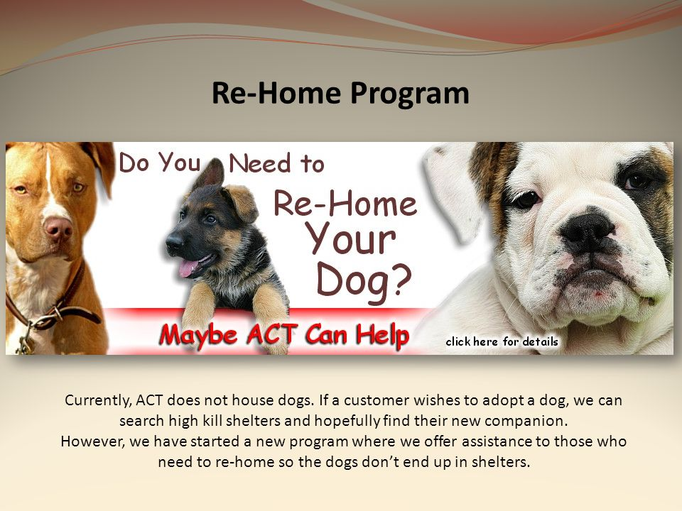 Re-Home Program Currently, ACT does not house dogs. If a customer wishes to adopt a dog, we can search high kill shelters and hopefully find their new