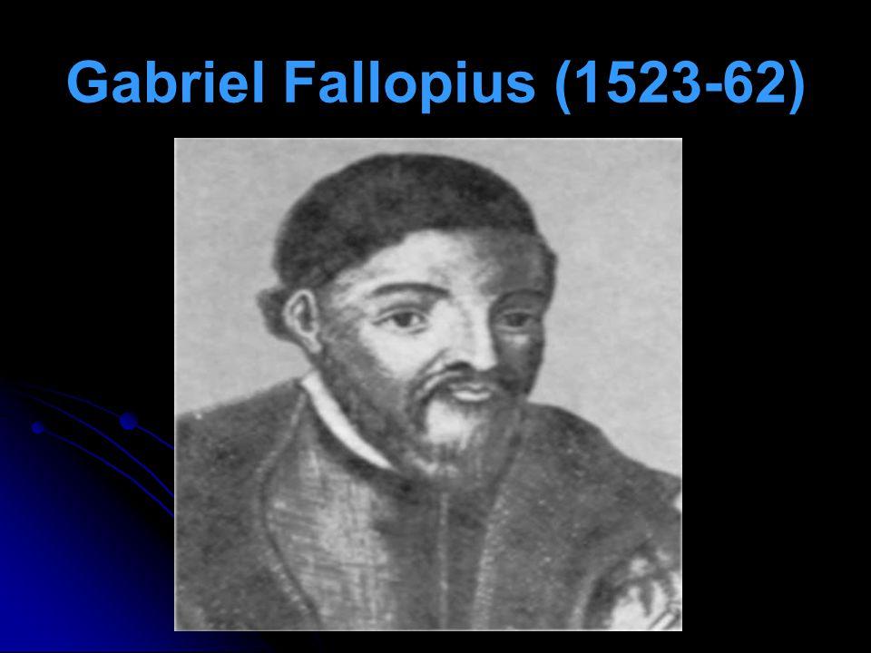 Gabriel Fallopius (1523-62)
