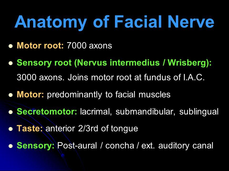 Anatomy of Facial Nerve Motor root: 7000 axons Sensory root (Nervus intermedius / Wrisberg): 3000 axons.