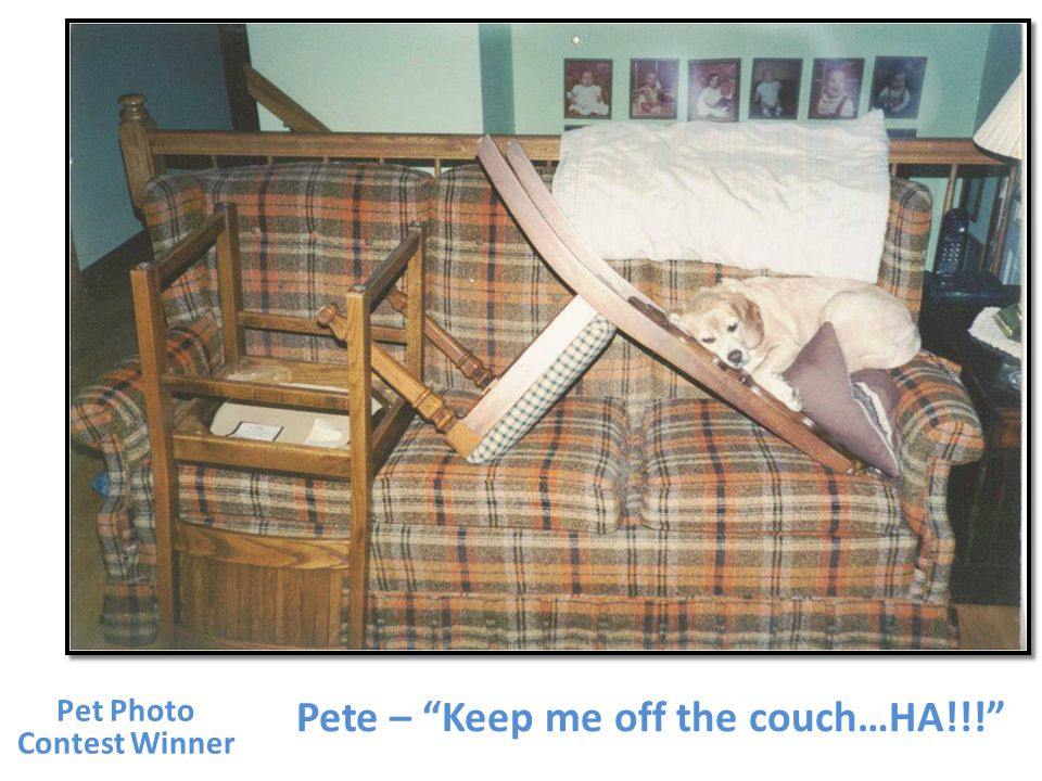 Pete – Keep me off the couch…HA!!! Pet Photo Contest Winner