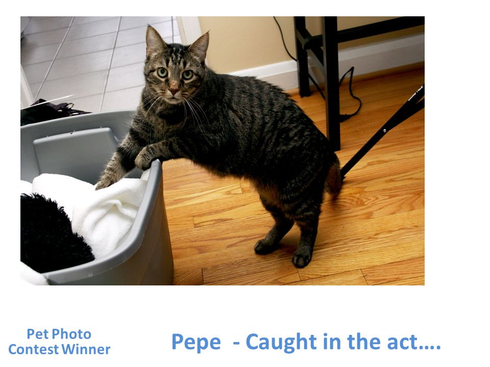 Pepe - Caught in the act…. Pet Photo Contest Winner