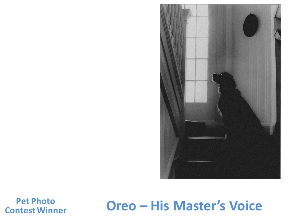 Oreo – His Masters Voice Pet Photo Contest Winner