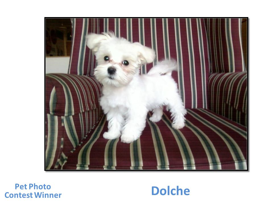 Dolche Pet Photo Contest Winner
