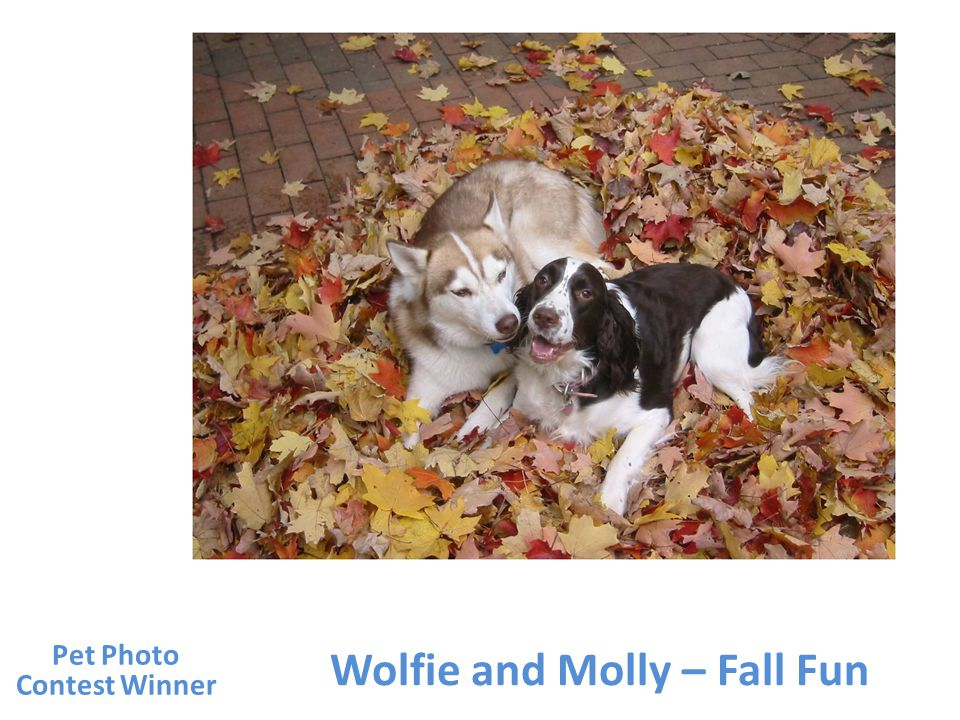 Wolfie and Molly – Fall Fun Pet Photo Contest Winner