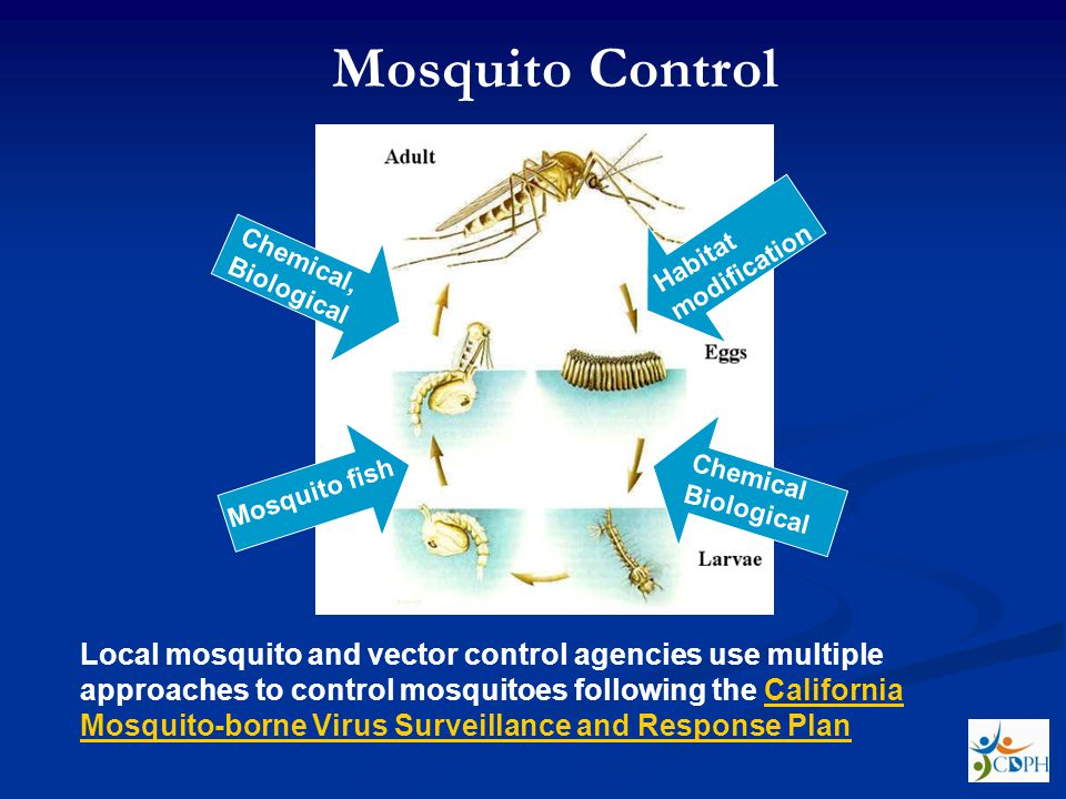 Habitat modification Chemical Biological Mosquito fish Chemical, Biological Mosquito Control Local mosquito and vector control agencies use multiple approaches to control mosquitoes following the California Mosquito-borne Virus Surveillance and Response PlanCalifornia Mosquito-borne Virus Surveillance and Response Plan