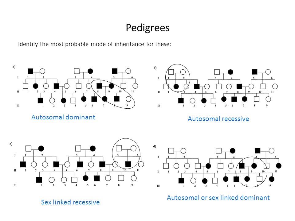 Pedigrees Identify the most probable mode of inheritance for these: Autosomal dominant Autosomal recessive Sex linked recessive Autosomal or sex linke