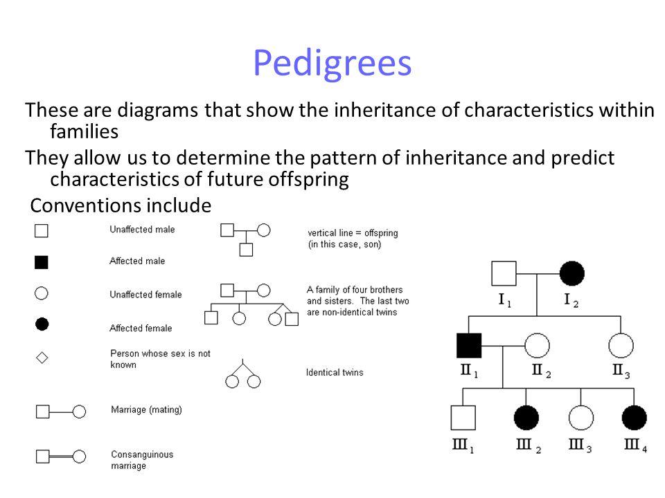 Autosomal dominant recessive crosses Pedigrees will show 2 phenotypes.