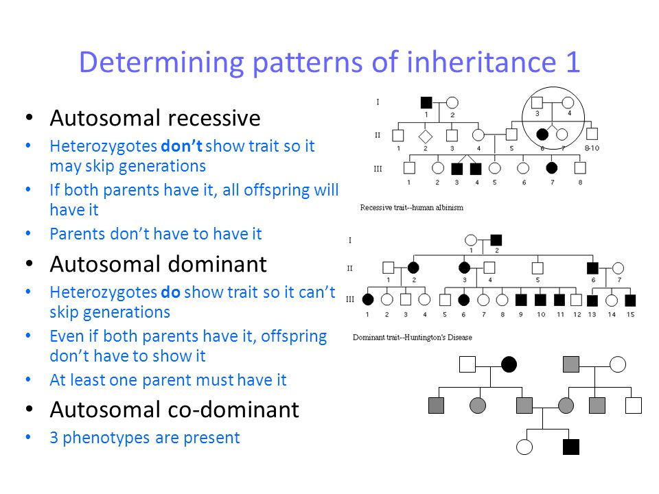 Sex linked inheritance Males and females have different chromosomes Males can only show 2 phenotypes (ie males can not be carriers) Females can show 3 phenotypes (if codominant) or 2 phenotypes (if dominant recessive, with a carrier) Males and females will show different patterns of inheritance