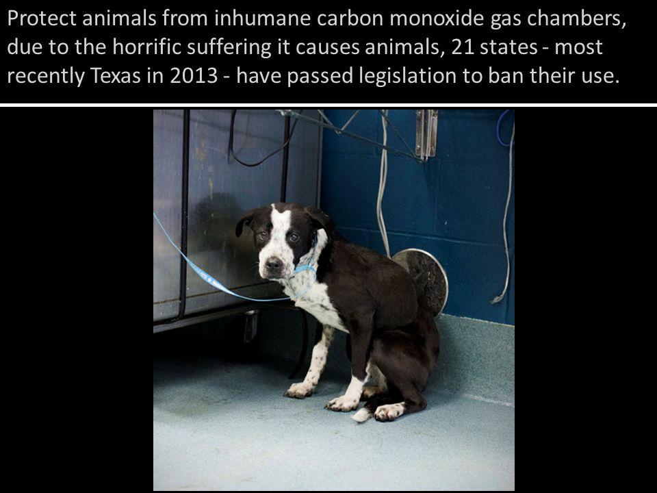 Protect animals from inhumane carbon monoxide gas chambers, due to the horrific suffering it causes animals, 21 states - most recently Texas in have passed legislation to ban their use.