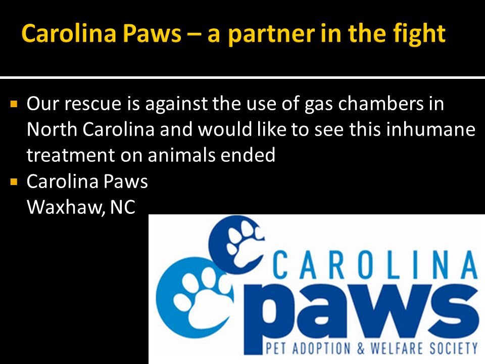 Our rescue is against the use of gas chambers in North Carolina and would like to see this inhumane treatment on animals ended Carolina Paws Waxhaw, NC