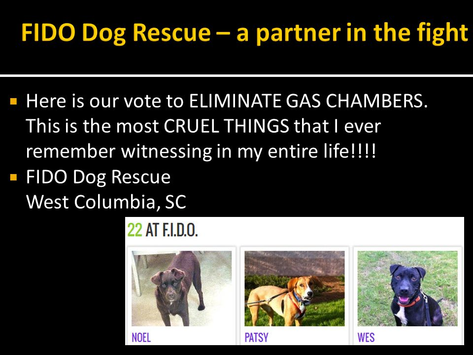 Here is our vote to ELIMINATE GAS CHAMBERS.