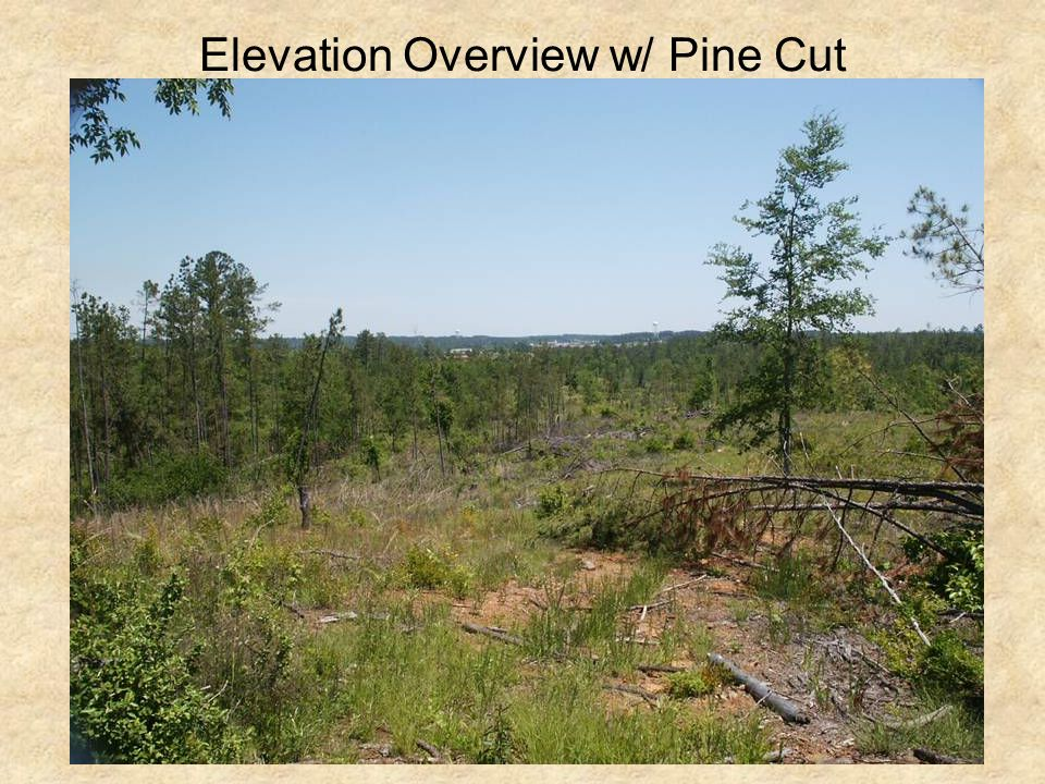 Elevation Overview w/ Pine Cut