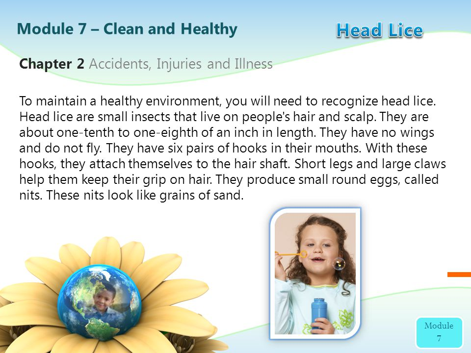 To maintain a healthy environment, you will need to recognize head lice. Head lice are small insects that live on people's hair and scalp. They are ab