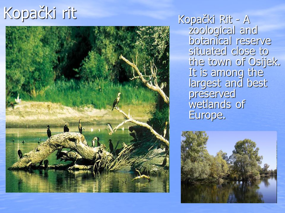 Kopački rit Kopački Rit - A zoological and botanical reserve situated close to the town of Osijek.