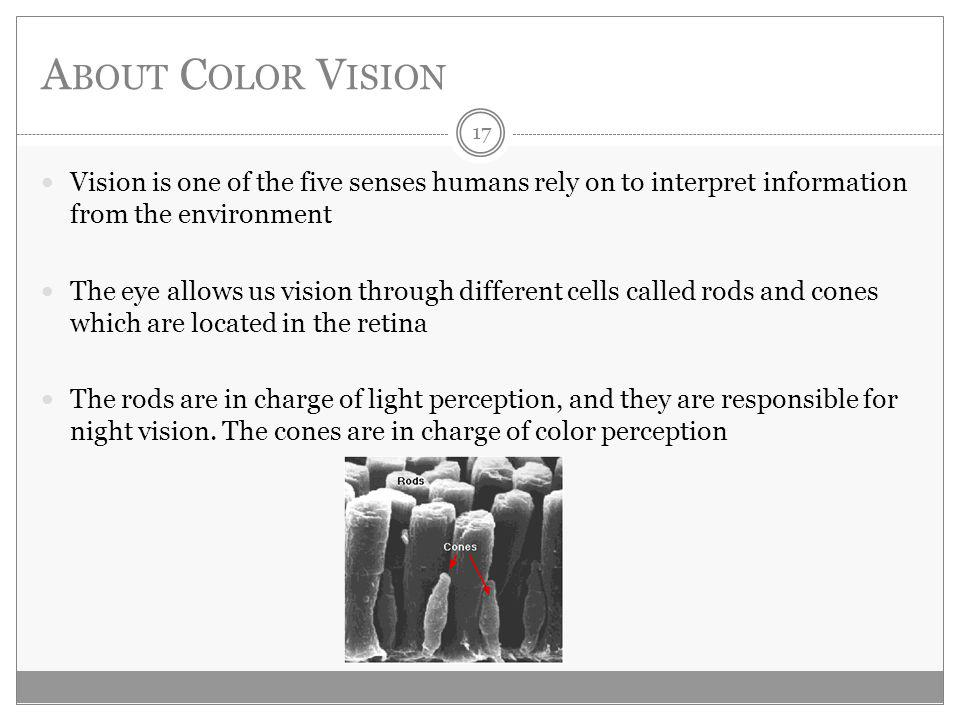 A BOUT C OLOR V ISION Vision is one of the five senses humans rely on to interpret information from the environment The eye allows us vision through different cells called rods and cones which are located in the retina The rods are in charge of light perception, and they are responsible for night vision.