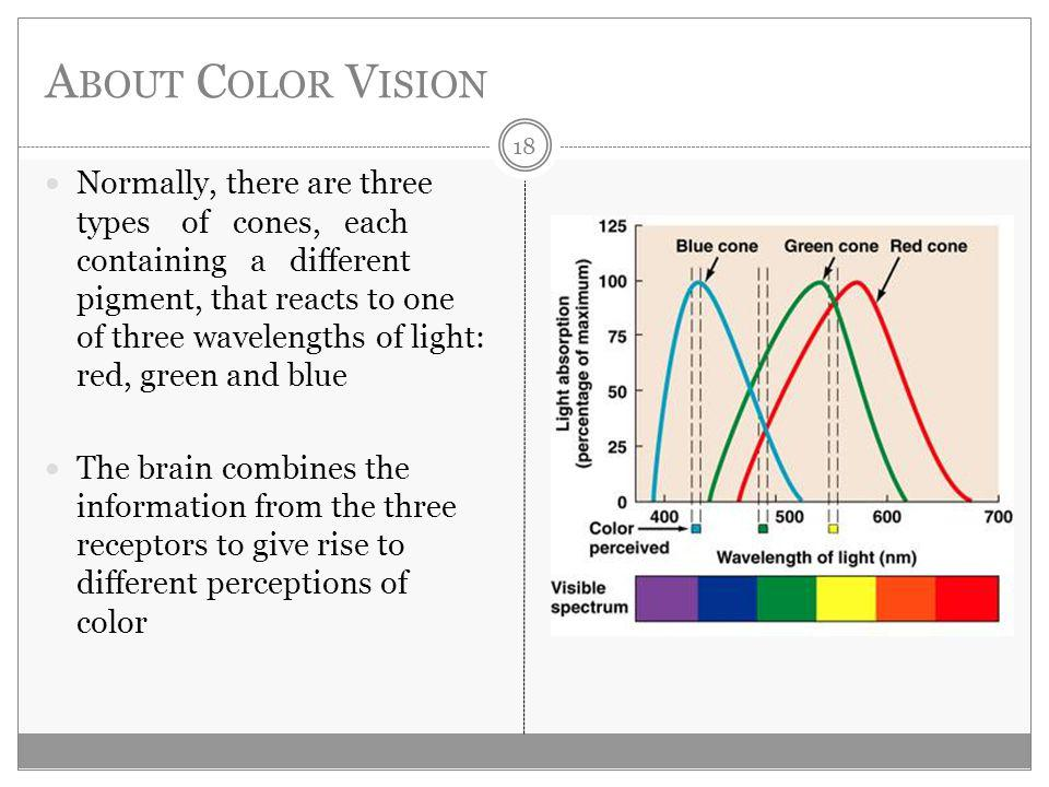A BOUT C OLOR V ISION Normally, there are three types of cones, each containing a different pigment, that reacts to one of three wavelengths of light: red, green and blue The brain combines the information from the three receptors to give rise to different perceptions of color 18