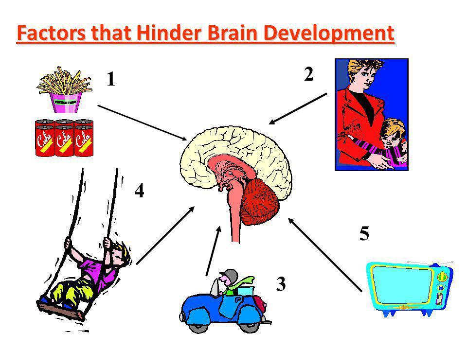 Factors that Hinder Brain Development 1 2 3 4 5