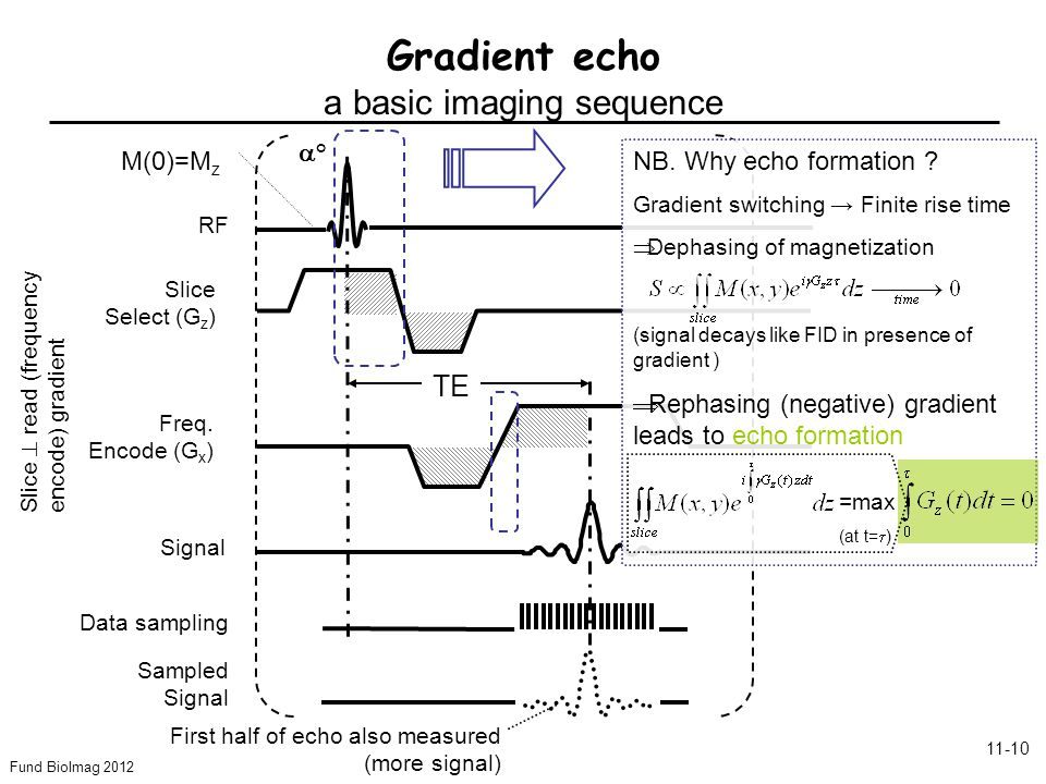 Fund BioImag 2012 11-10 Gradient echo a basic imaging sequence Slice Select (G z ) Freq. Encode (G x ) RF Signal ° TE Data sampling Sampled Signal Sli