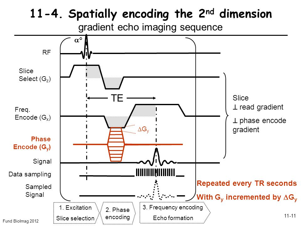 Fund BioImag 2012 11-11 11-4. Spatially encoding the 2 nd dimension gradient echo imaging sequence Slice Select (G z ) Freq. Encode (G x ) RF Signal °