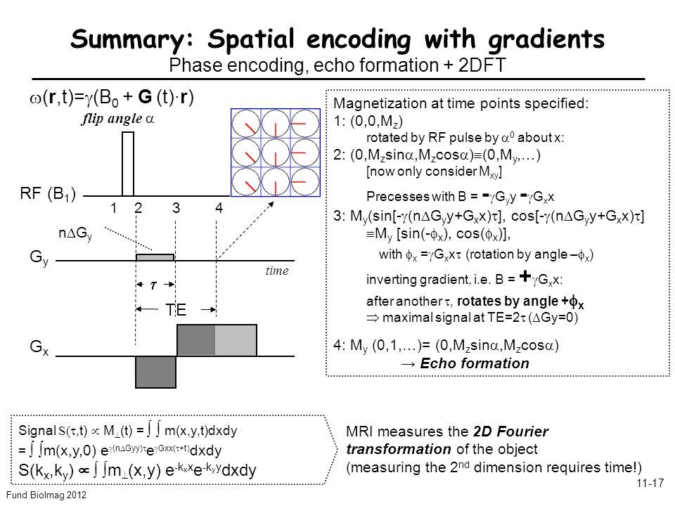 Fund BioImag 2012 11-17 Summary: Spatial encoding with gradients Phase encoding, echo formation + 2DFT time GyGy Dephasing at point (x,y) in space: m( )=m(0)e -i with = G y y k y y GxGx Signal S(,t) M (t) = m(x,y,t)dxdy = m(x,y,0) e (n Gyy) e Gxx( +t) dxdy S(k x,k y ) m (x,y) e -k x x e -k y y dxdy m(t)=m( )e -i with = G x xt k x x Echo formation: (TE )=0 TE RF (B 1 ) 1234 Magnetization at time points specified: 1: (0,0,M z ) rotated by RF pulse by 0 about x: 2: (0,M z sin,M z cos ) (0,M y,…) [now only consider M xy ] Precesses with B = - G y y - G x x 3: M y (sin[- (n G y y+G x x) ], cos[- (n G y y+G x x) ] M y [sin(- x ), cos( x )], with x = G x x (rotation by angle – x ) inverting gradient, i.e.