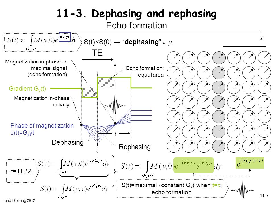 Fund BioImag 2012 11-7 Dephasing Rephasing TE y x 11-3. Dephasing and rephasing Echo formation Phase of magnetization (t)=G y yt Gradient G y (t) Magn