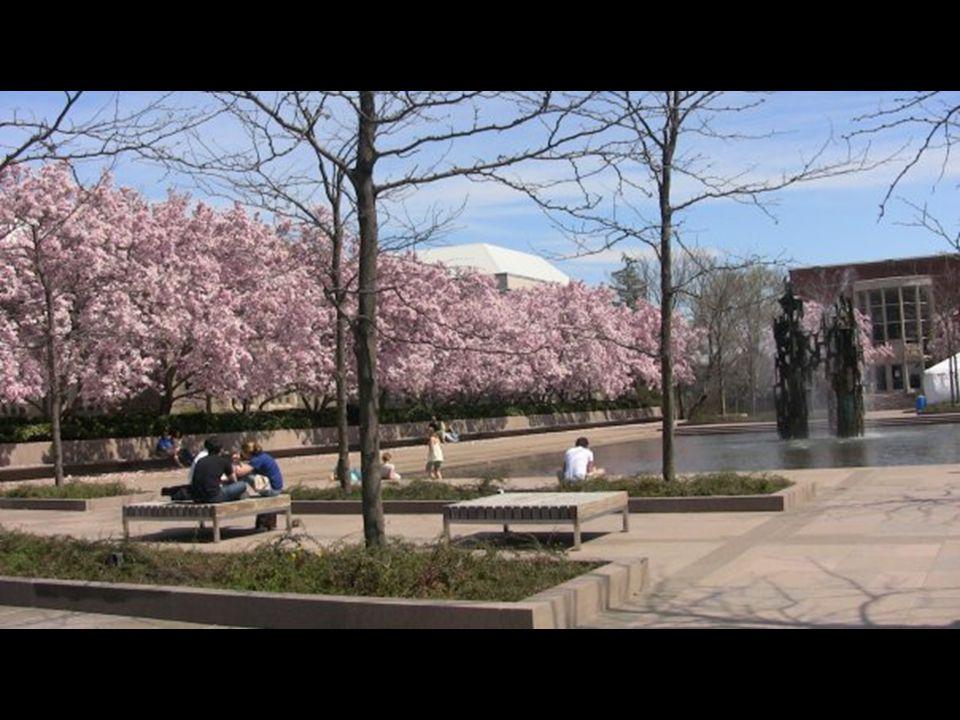 Princeton Chemistry Department Spring 2009