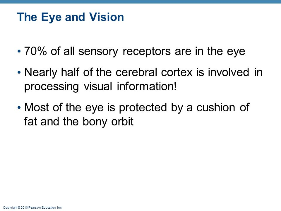 Copyright © 2010 Pearson Education, Inc. The Eye and Vision 70% of all sensory receptors are in the eye Nearly half of the cerebral cortex is involved
