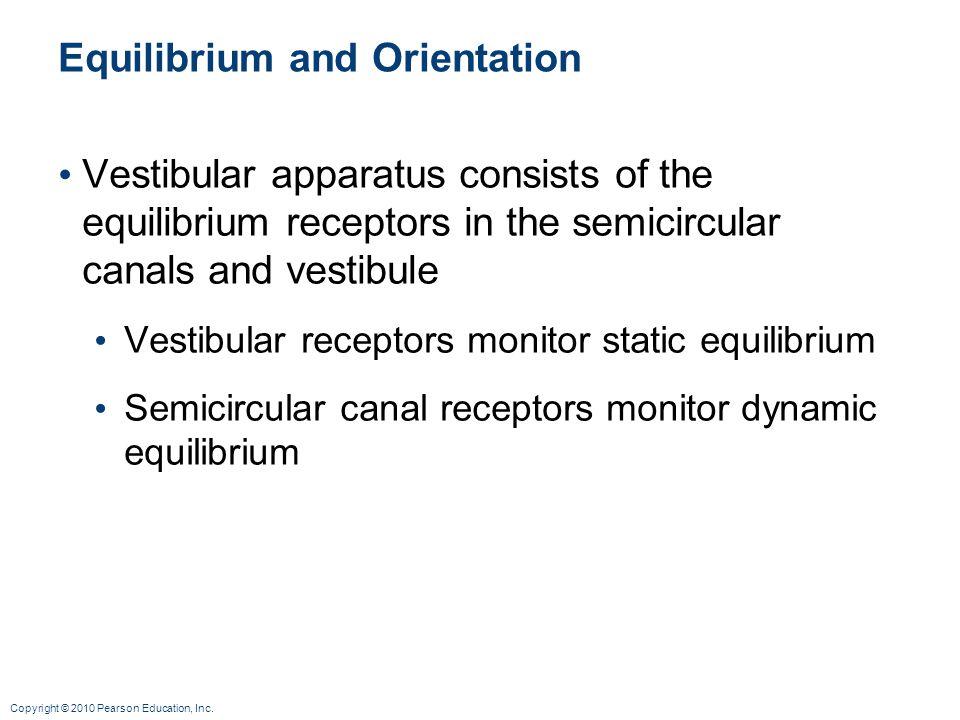 Copyright © 2010 Pearson Education, Inc. Equilibrium and Orientation Vestibular apparatus consists of the equilibrium receptors in the semicircular ca