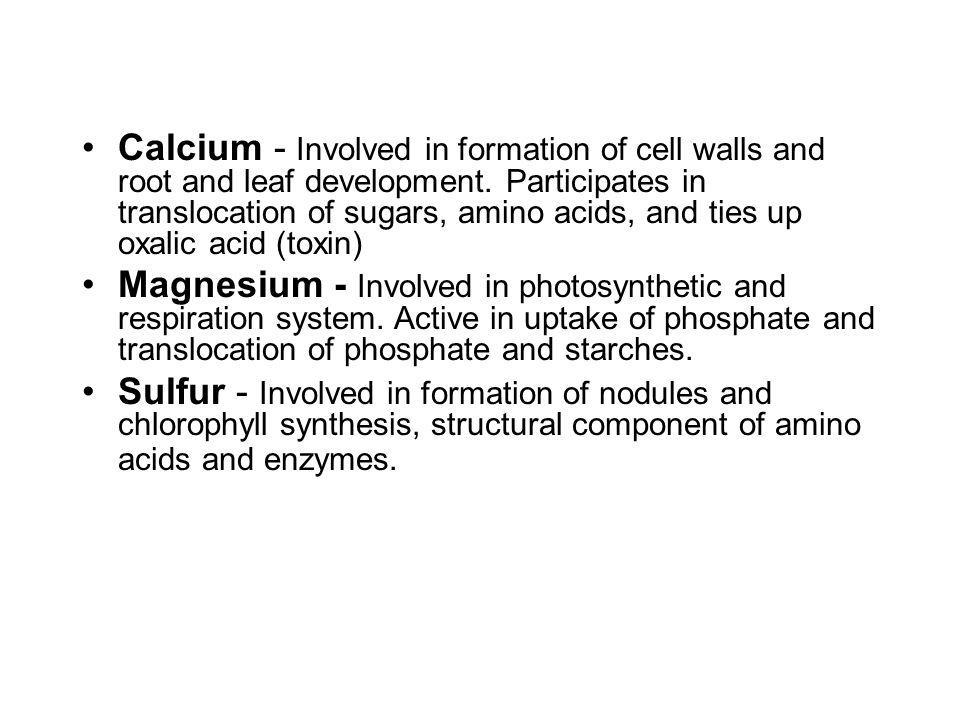 Calcium - Involved in formation of cell walls and root and leaf development. Participates in translocation of sugars, amino acids, and ties up oxalic