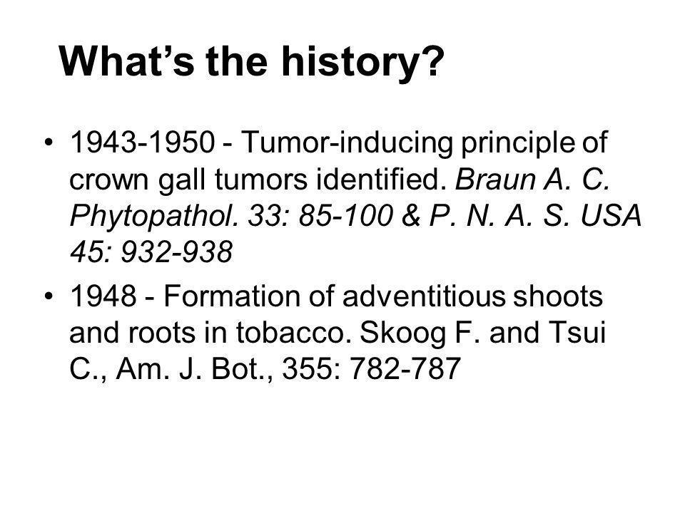 Whats the history.1952 - Virus-free Dahlia through meristem culture.