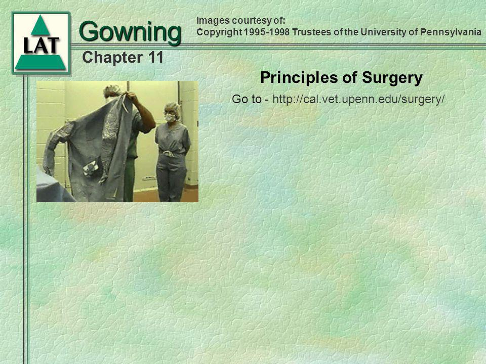 Chapter 11 Gowning Go to - http://cal.vet.upenn.edu/surgery/ Principles of Surgery Images courtesy of: Copyright 1995-1998 Trustees of the University