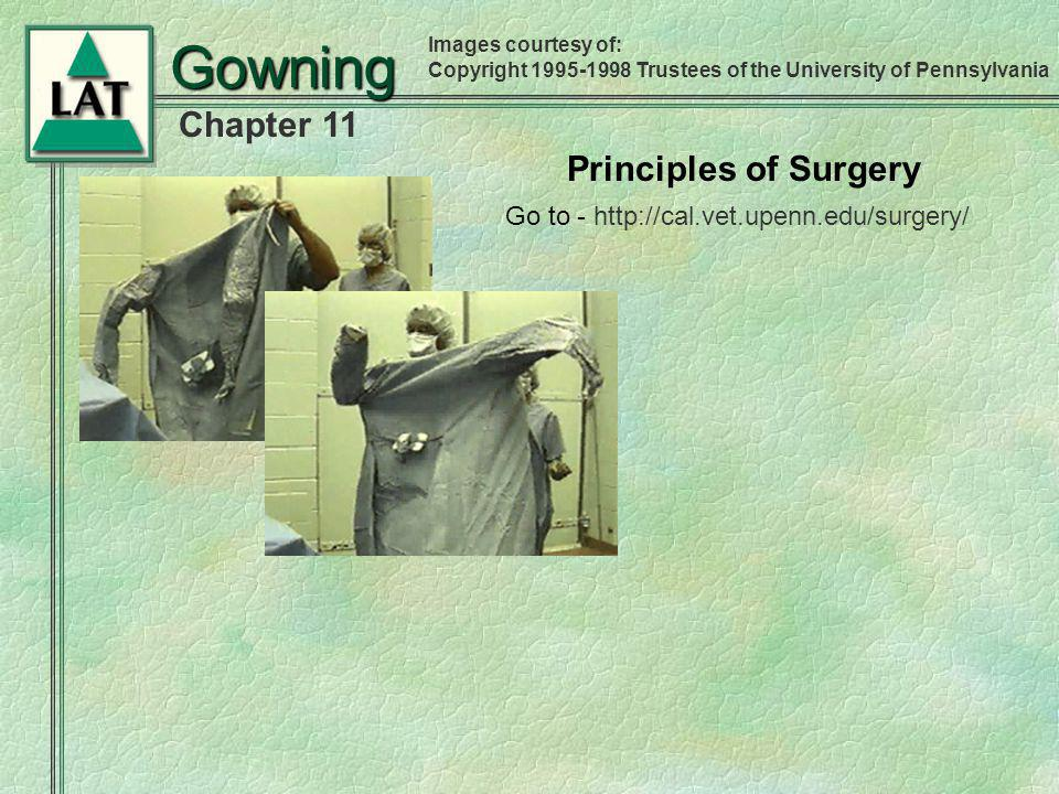 Chapter 11 Gowning Principles of Surgery Images courtesy of: Copyright 1995-1998 Trustees of the University of Pennsylvania Go to - http://cal.vet.upe