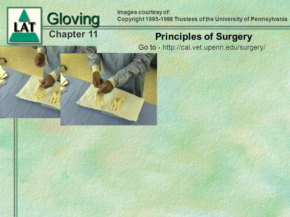 Chapter 11 Gloving Principles of Surgery Images courtesy of: Copyright 1995-1998 Trustees of the University of Pennsylvania Go to - http://cal.vet.upe