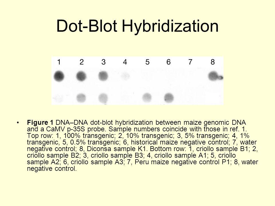Dot-Blot Hybridization Figure 1 DNA–DNA dot-blot hybridization between maize genomic DNA and a CaMV p-35S probe.