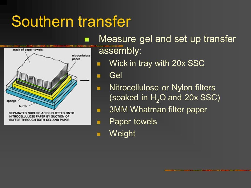 Southern transfer Measure gel and set up transfer assembly: Wick in tray with 20x SSC Gel Nitrocellulose or Nylon filters (soaked in H 2 O and 20x SSC