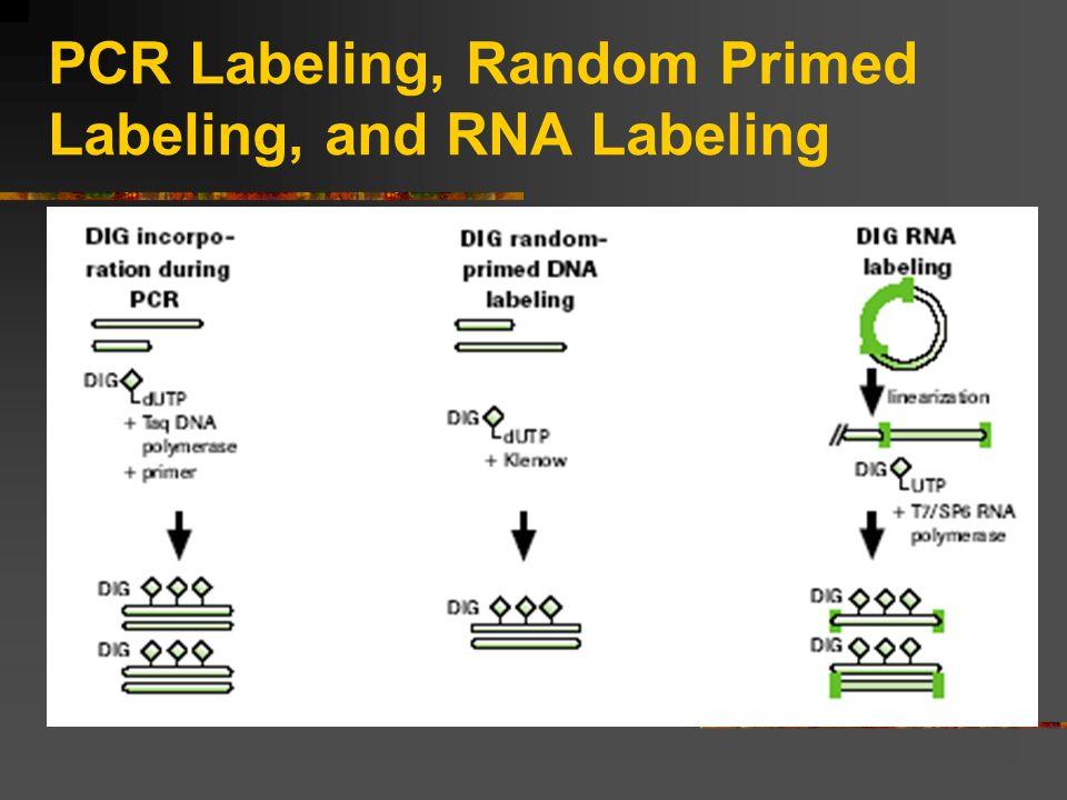 PCR Labeling, Random Primed Labeling, and RNA Labeling