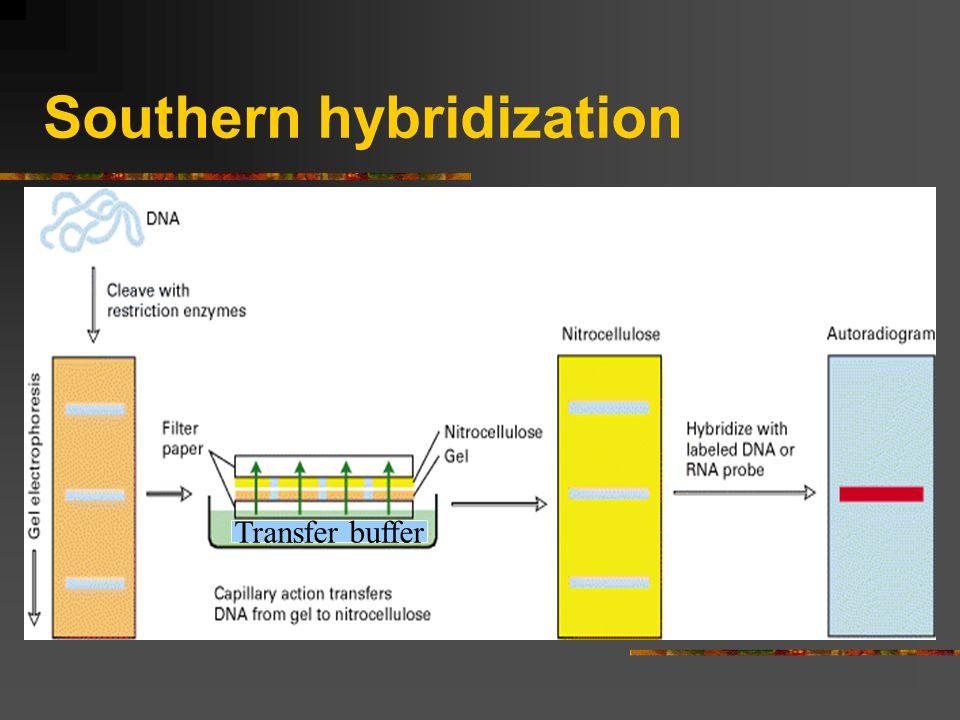 Southern hybridization Transfer buffer
