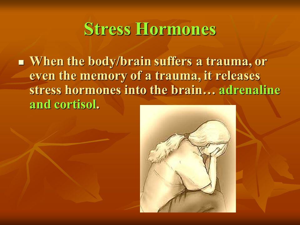 Stress Hormones When the body/brain suffers a trauma, or even the memory of a trauma, it releases stress hormones into the brain… adrenaline and corti