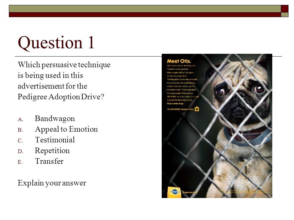 Question 1 Which persuasive technique is being used in this advertisement for the Pedigree Adoption Drive? A. Bandwagon B. Appeal to Emotion C. Testim