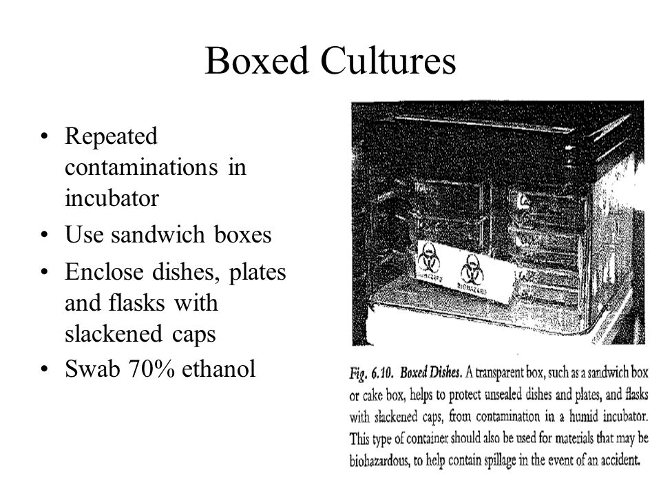 Boxed Cultures Repeated contaminations in incubator Use sandwich boxes Enclose dishes, plates and flasks with slackened caps Swab 70% ethanol