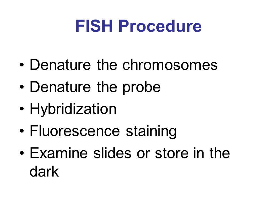 FISH Procedure Denature the chromosomes Denature the probe Hybridization Fluorescence staining Examine slides or store in the dark
