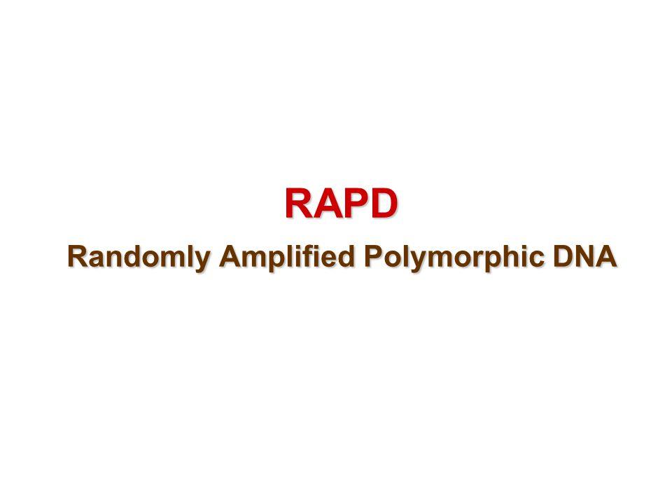 RAPD Randomly Amplified Polymorphic DNA